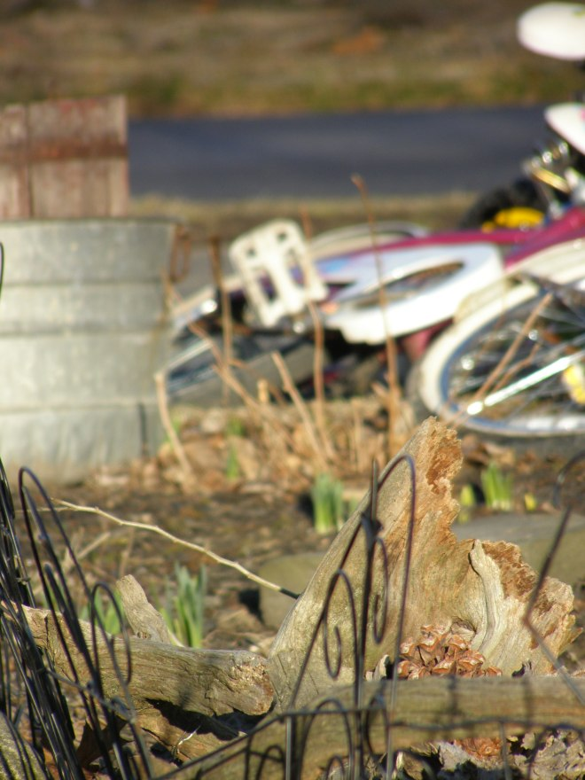 daffodils once asleep now  greeting... bicycles once neglected now reclaimed